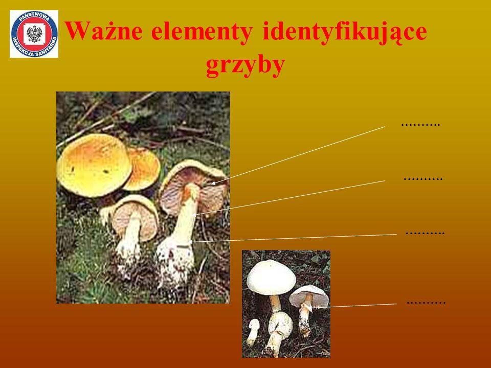 Ważne elementy identyfikujące grzyby