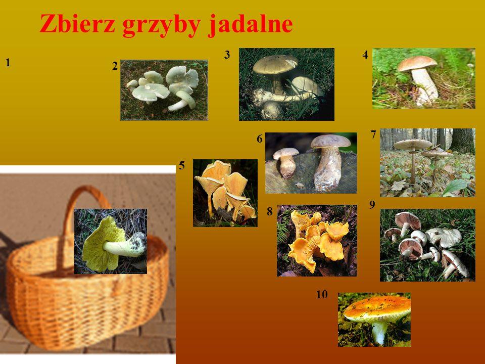 Zbierz grzyby jadalne 3 4 1 2 7 6 5 9 8 10