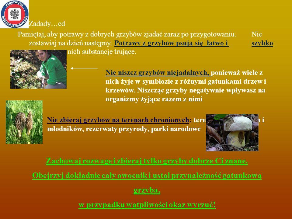 Zadady…cd Pamiętaj, aby potrawy z dobrych grzybów zjadać zaraz po przygotowaniu. Nie zostawiaj na dzień następny. Potrawy z grzybów psują się łatwo i szybko i powstają w nich substancje trujące. Nie niszcz grzybów niejadalnych, ponieważ wiele z nich żyje w symbiozie z różnymi gatunkami drzew i krzewów. Niszcząc grzyby negatywnie wpływasz na organizmy żyjące razem z nimi Nie zbieraj grzybów na terenach chronionych: tereny upraw leśnych i młodników, rezerwaty przyrody, parki narodowe