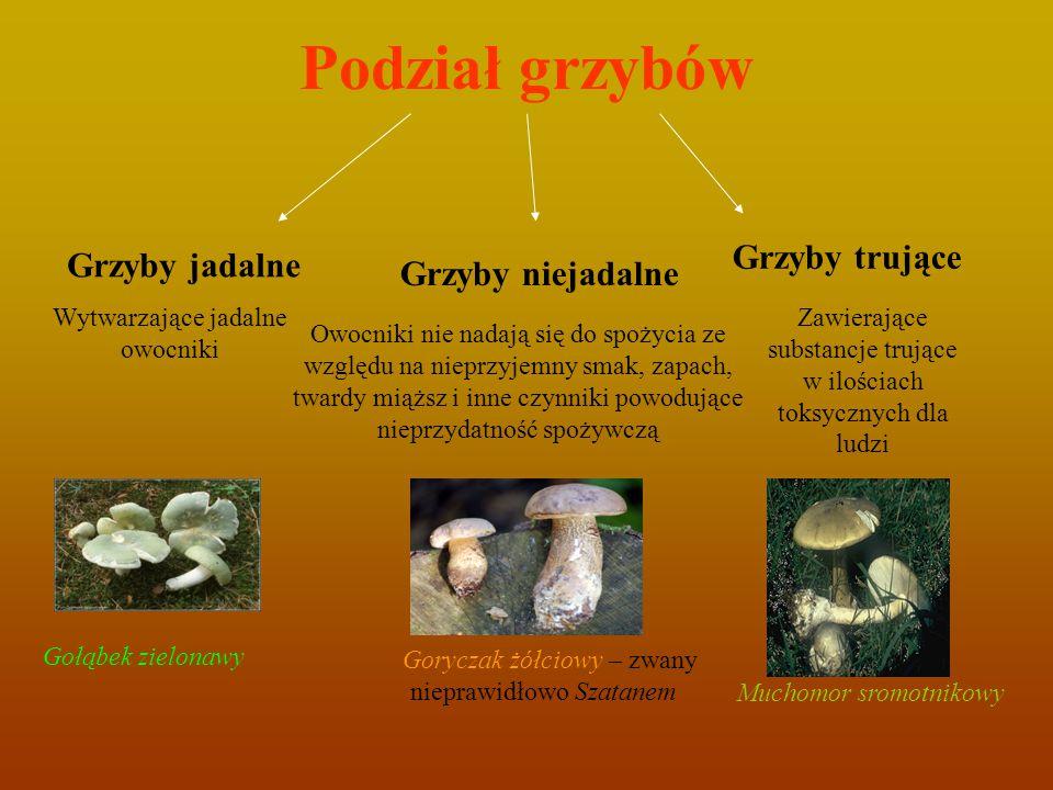 Podział grzybów Grzyby trujące Grzyby jadalne Grzyby niejadalne