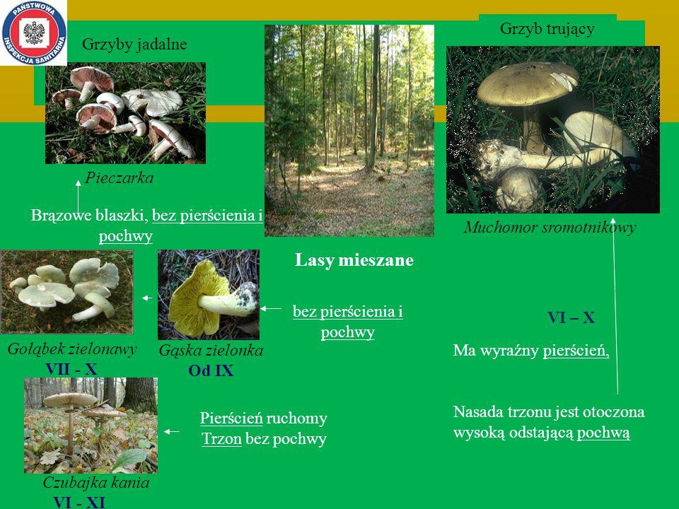 Lasy mieszane Grzyb trujący Grzyby jadalne bez pierścienia i pochwy