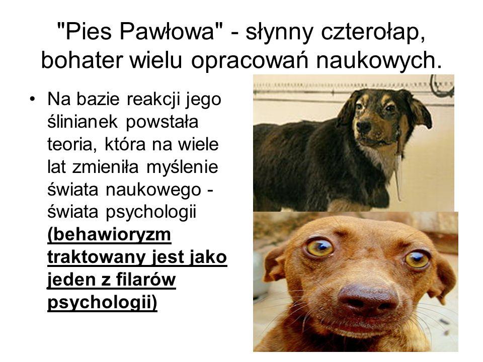 Pies Pawłowa - słynny czterołap, bohater wielu opracowań naukowych.