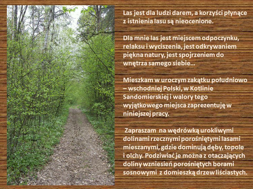 Las jest dla ludzi darem, a korzyści płynące z istnienia lasu są nieocenione.