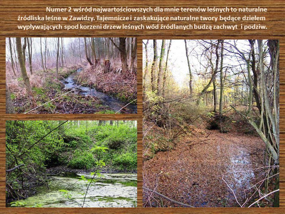 Numer 2 wśród najwartościowszych dla mnie terenów leśnych to naturalne źródliska leśne w Zawidzy. Tajemnicze i zaskakujące naturalne twory będące dziełem wypływających spod korzeni drzew leśnych wód źródlanych budzą zachwyt i podziw.