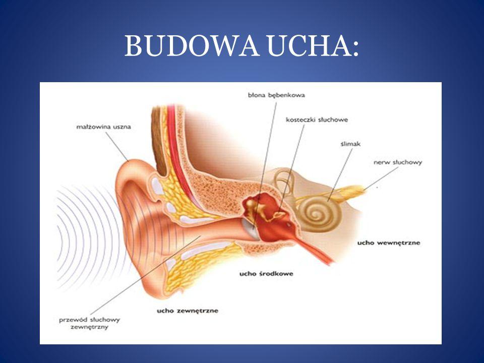 BUDOWA UCHA: