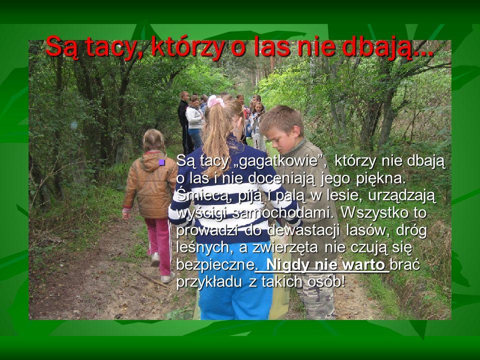Są tacy, którzy o las nie dbają…