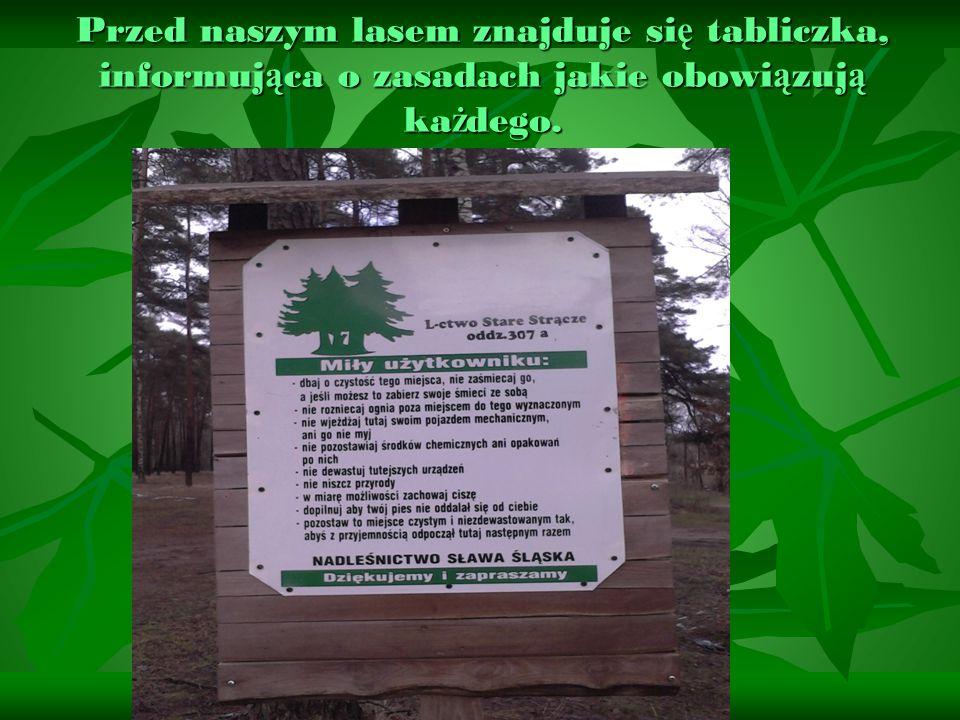 Przed naszym lasem znajduje się tabliczka, informująca o zasadach jakie obowiązują każdego.
