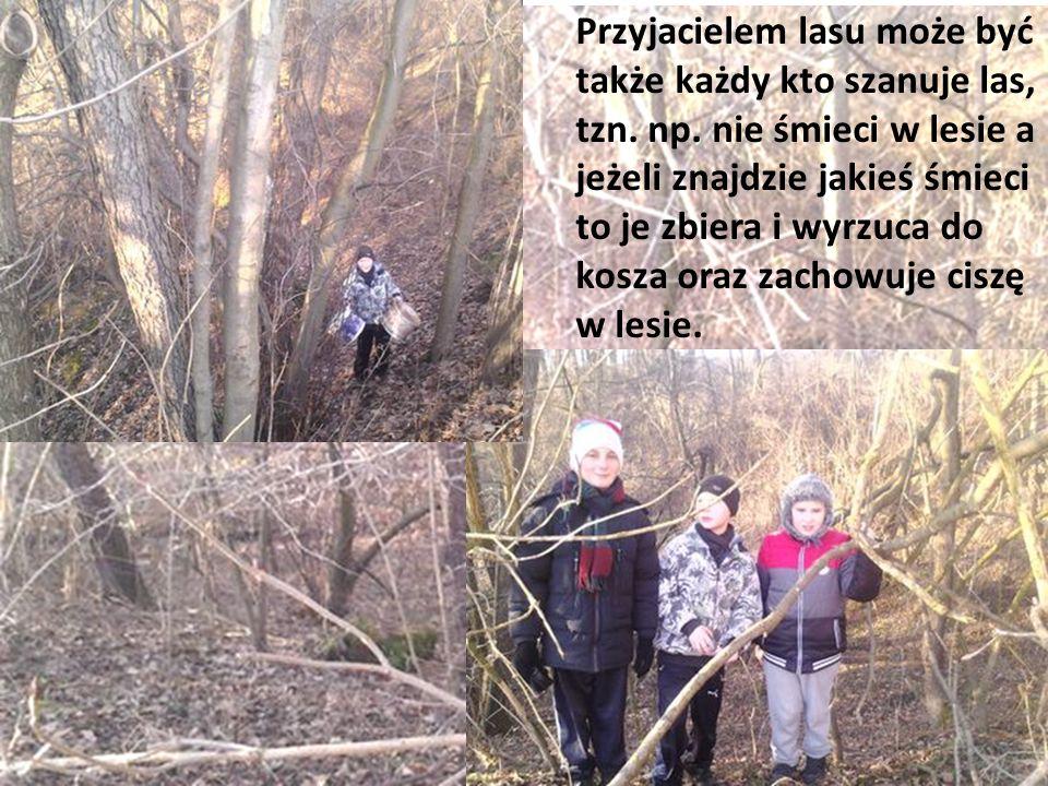 Przyjacielem lasu może być także każdy kto szanuje las, tzn. np