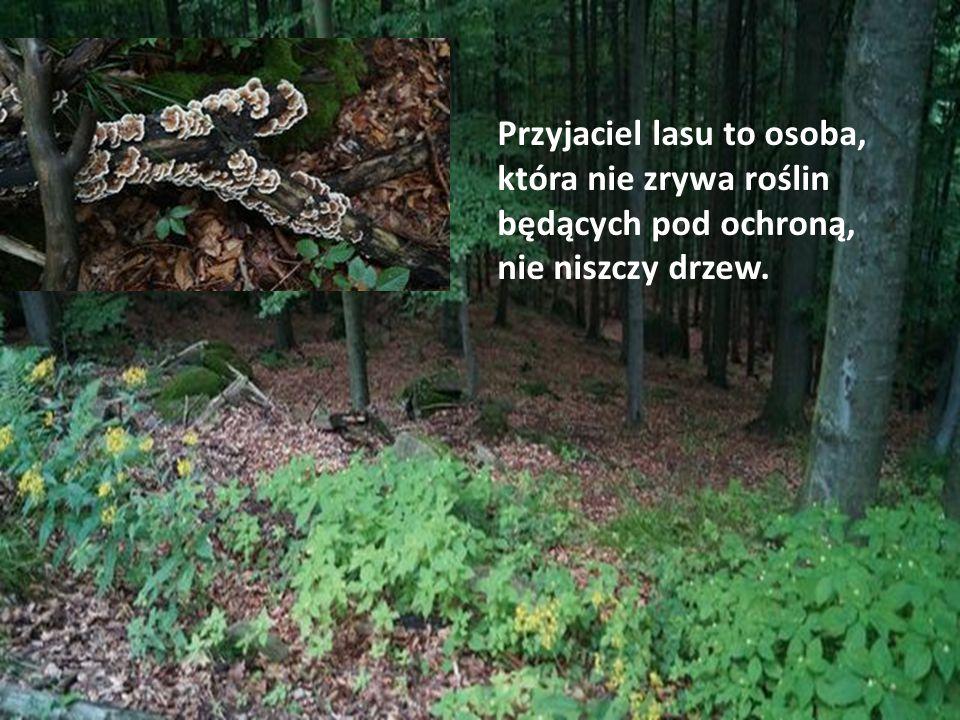 Przyjaciel lasu to osoba, która nie zrywa roślin będących pod ochroną, nie niszczy drzew.