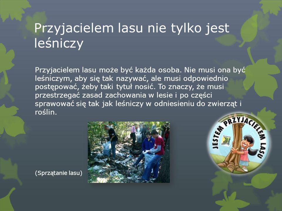 Przyjacielem lasu nie tylko jest leśniczy