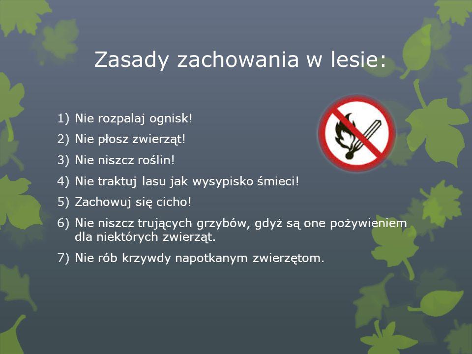 Zasady zachowania w lesie:
