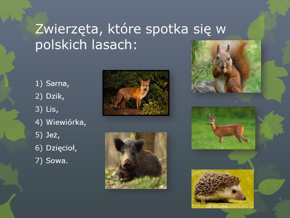 Zwierzęta, które spotka się w polskich lasach: