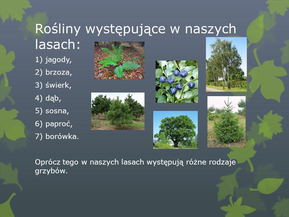 Rośliny występujące w naszych lasach: