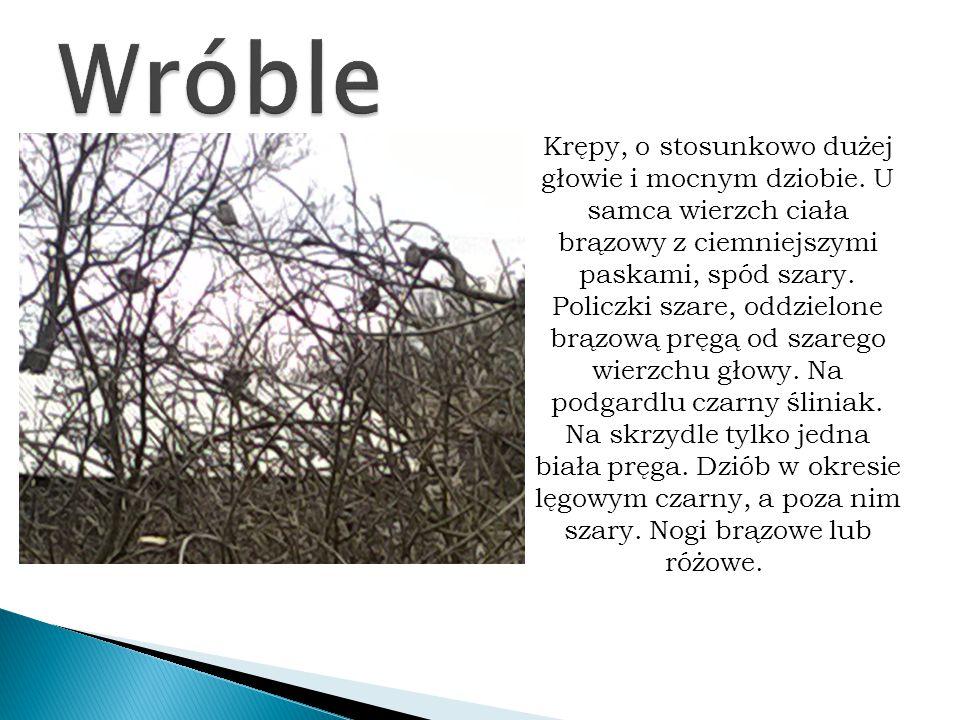 Wróble