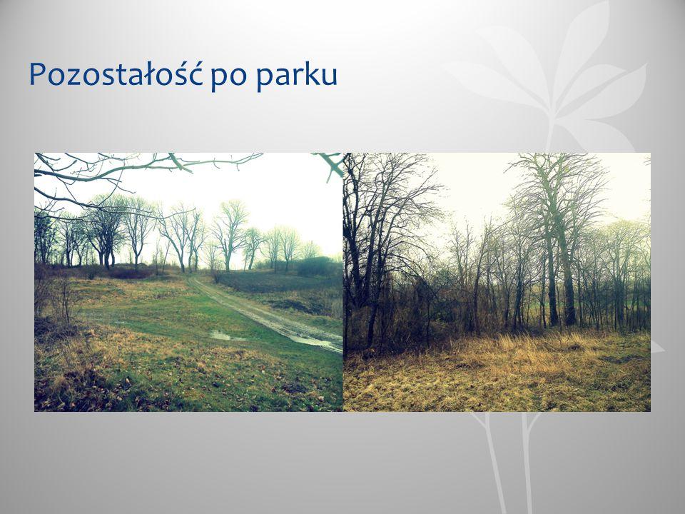 Pozostałość po parku