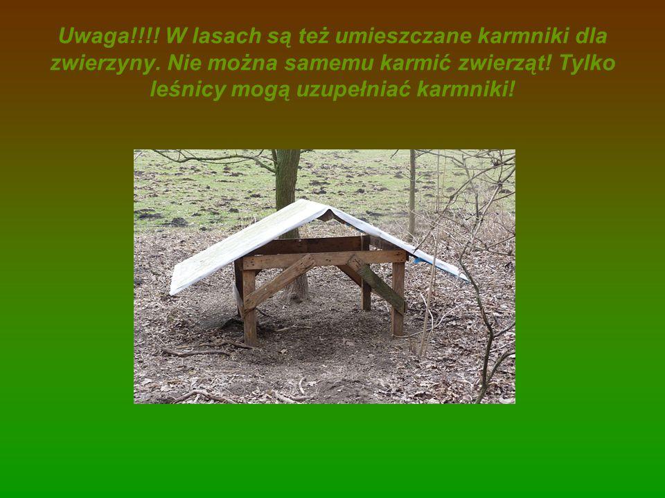 Uwaga. W lasach są też umieszczane karmniki dla zwierzyny