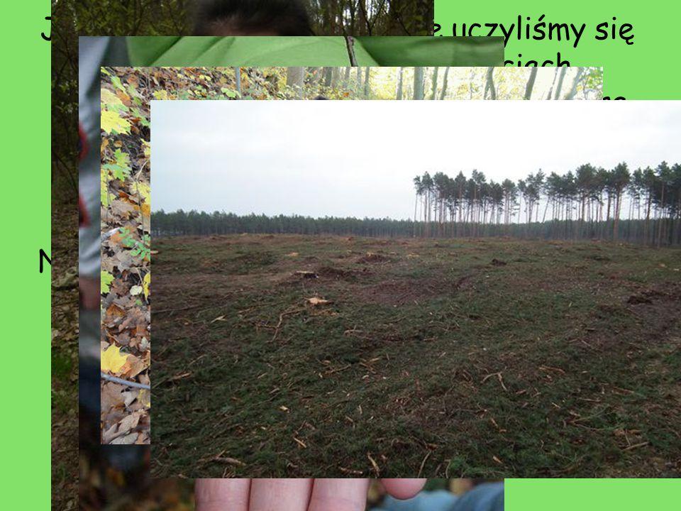 Jesienią na zajęciach w lesie uczyliśmy się rozpoznawać drzewa; po liściach, nasionach i korze. Była to bardzo dobra nauka praktyczna, po której nie mam problemu z nazywaniem drzew i krzewów.