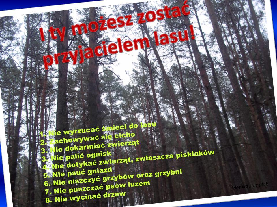I ty możesz zostać przyjacielem lasu!