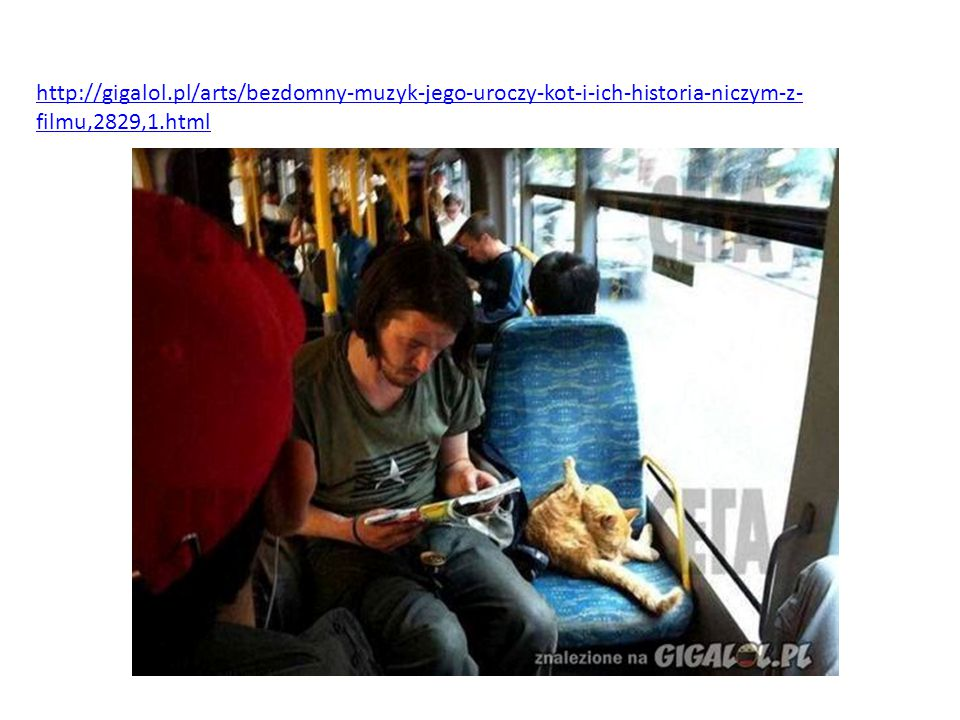 http://gigalol.pl/arts/bezdomny-muzyk-jego-uroczy-kot-i-ich-historia-niczym-z-filmu,2829,1.html