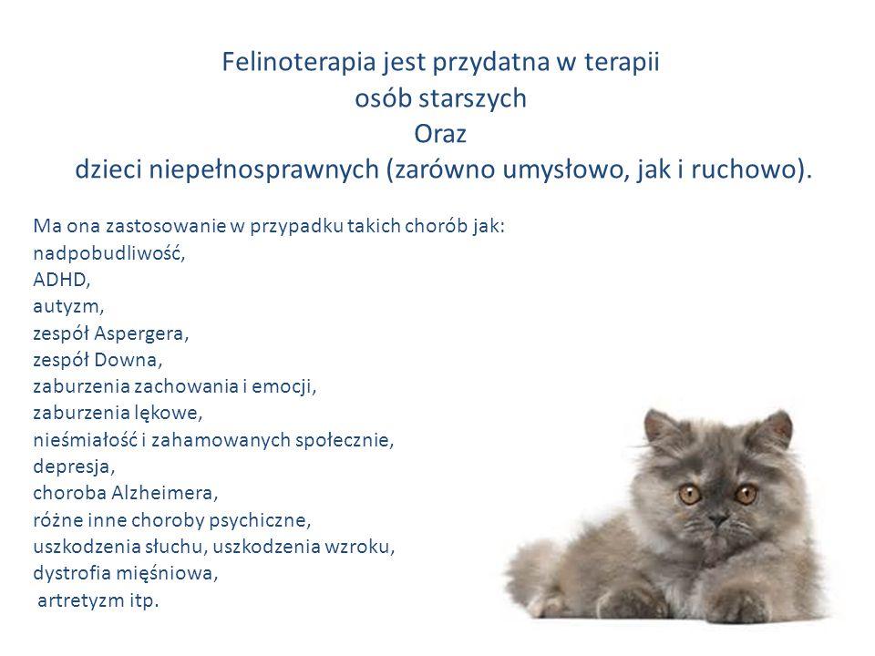 Felinoterapia jest przydatna w terapii osób starszych Oraz