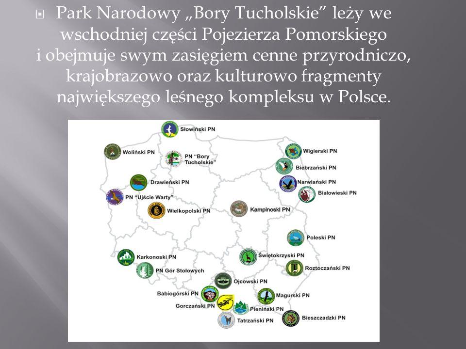"""Park Narodowy """"Bory Tucholskie leży we wschodniej części Pojezierza Pomorskiego i obejmuje swym zasięgiem cenne przyrodniczo, krajobrazowo oraz kulturowo fragmenty największego leśnego kompleksu w Polsce."""