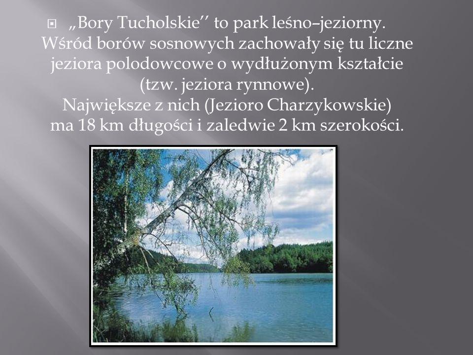 """Bory Tucholskie'' to park leśno–jeziorny"