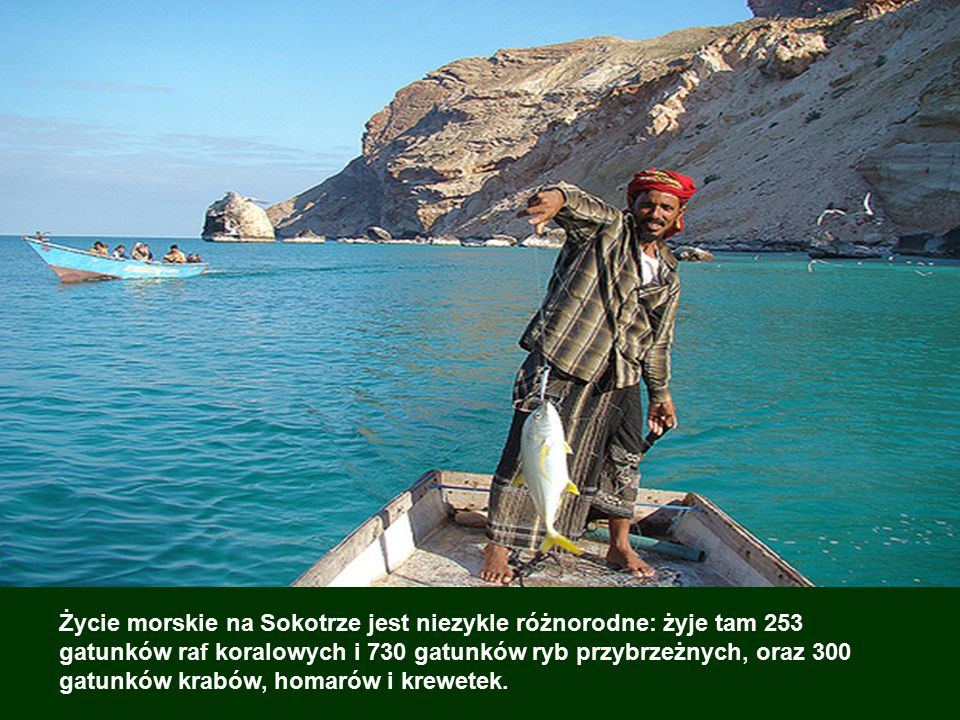 Życie morskie na Sokotrze jest niezykle różnorodne: żyje tam 253 gatunków raf koralowych i 730 gatunków ryb przybrzeżnych, oraz 300 gatunków krabów, homarów i krewetek.