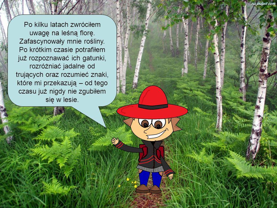 Po kilku latach zwróciłem uwagę na leśną florę