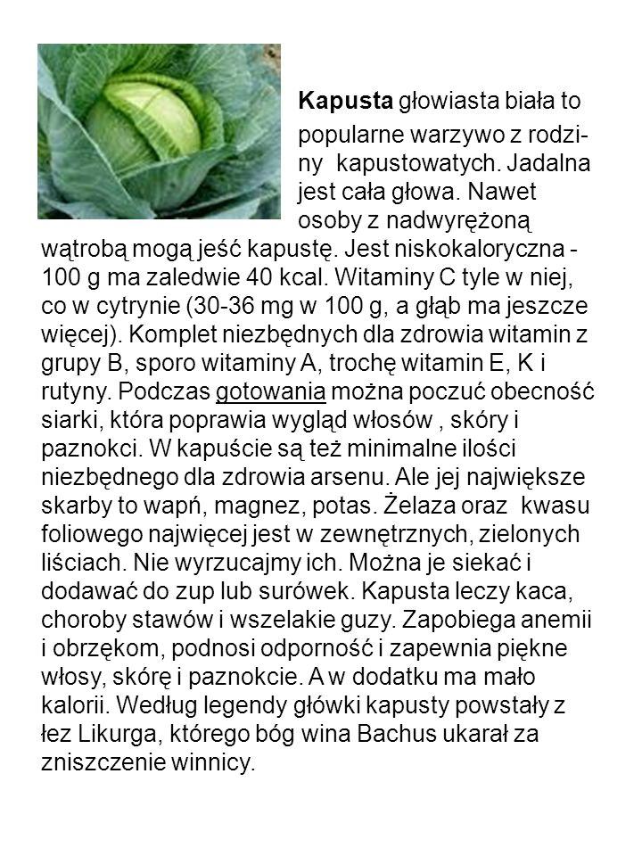 Kapusta głowiasta biała to. popularne warzywo z rodzi-