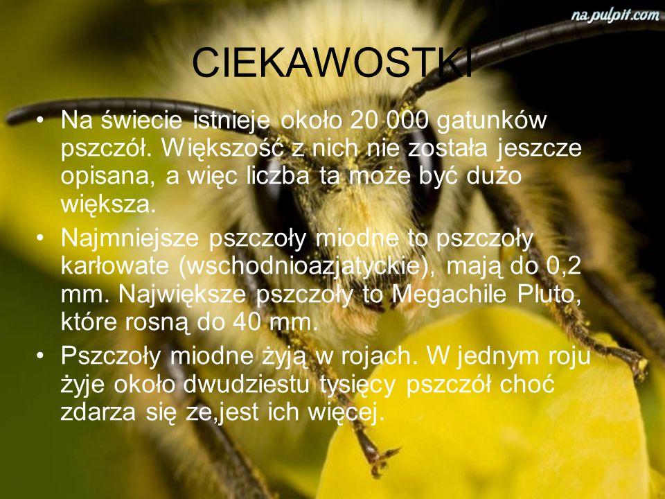 CIEKAWOSTKI Na świecie istnieje około 20 000 gatunków pszczół. Większość z nich nie została jeszcze opisana, a więc liczba ta może być dużo większa.