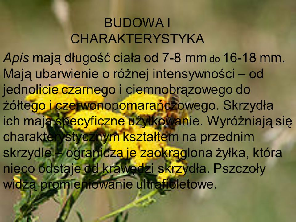 BUDOWA I CHARAKTERYSTYKA