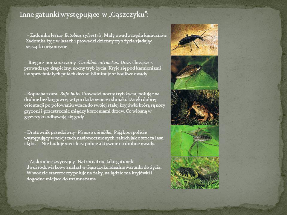 """Inne gatunki występujące w """"Gąszczyku :"""