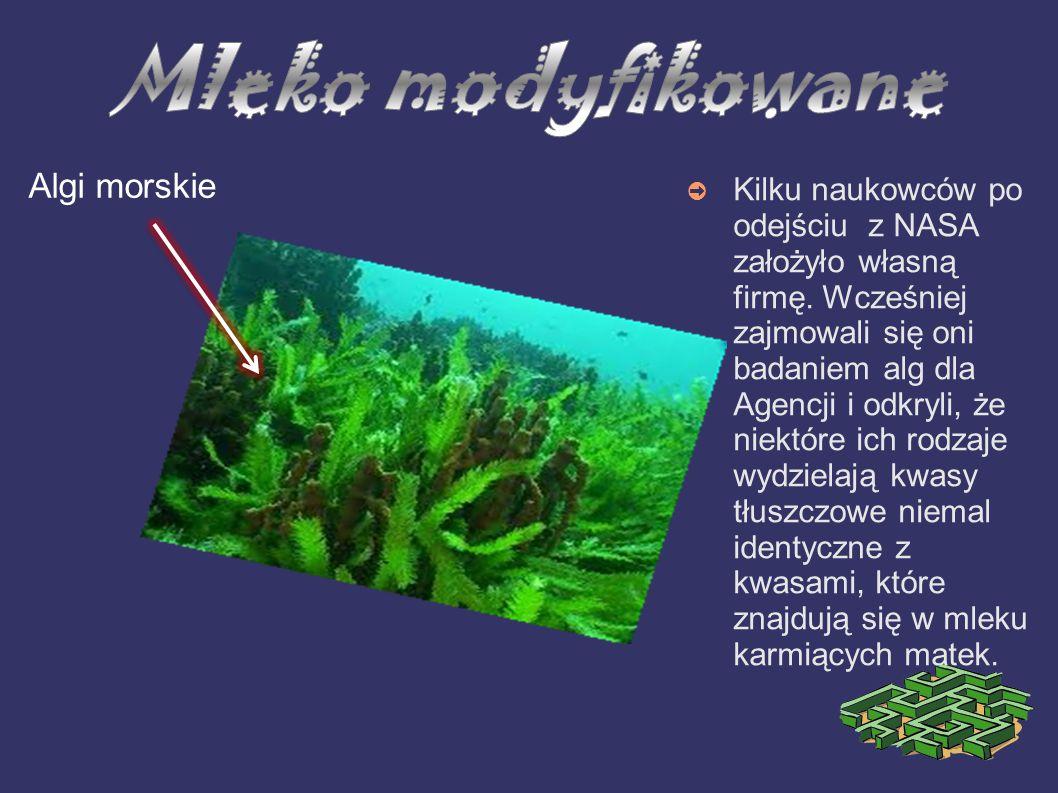 Mleko modyfikowane Algi morskie