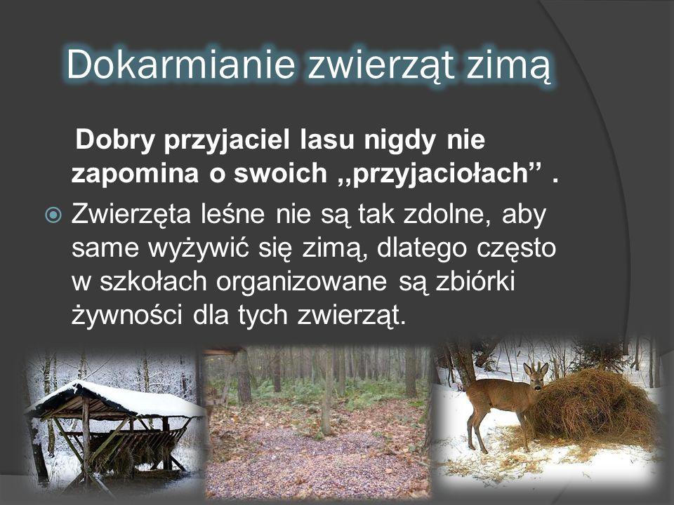 Dokarmianie zwierząt zimą