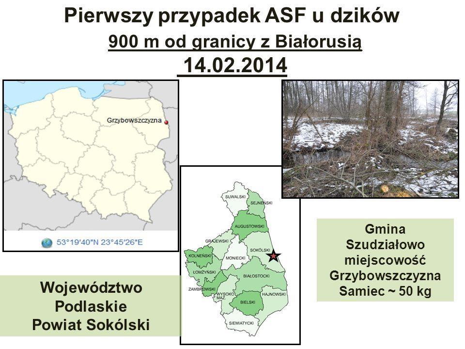 Pierwszy przypadek ASF u dzików 900 m od granicy z Białorusią
