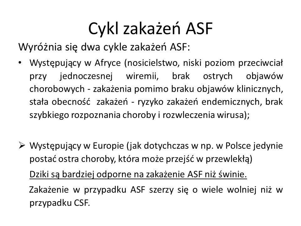 Cykl zakażeń ASF Wyróżnia się dwa cykle zakażeń ASF: