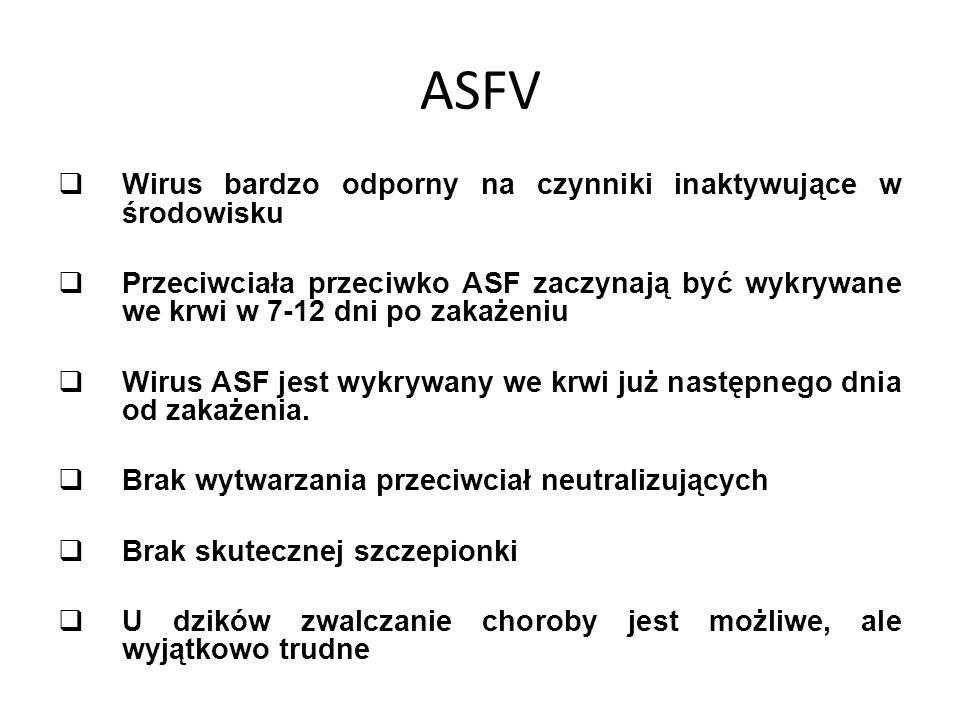 ASFV Wirus bardzo odporny na czynniki inaktywujące w środowisku