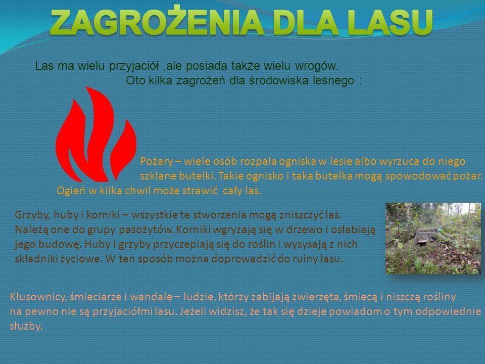 Oto kilka zagrożeń dla środowiska leśnego :