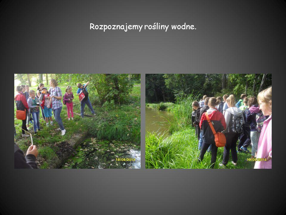 Rozpoznajemy rośliny wodne.