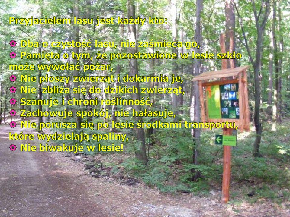 Przyjacielem lasu jest każdy kto: