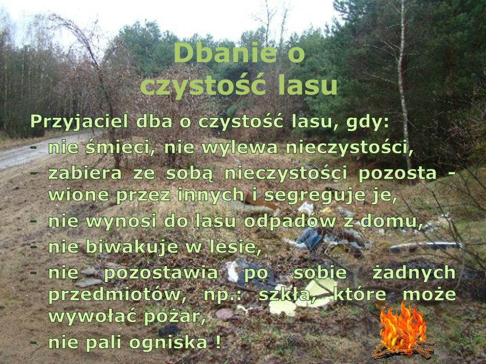 Dbanie o czystość lasu Przyjaciel dba o czystość lasu, gdy: