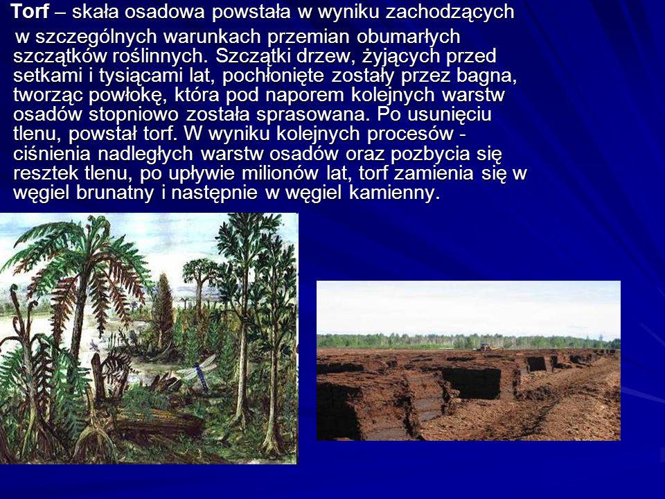 Torf – skała osadowa powstała w wyniku zachodzących w szczególnych warunkach przemian obumarłych szczątków roślinnych.