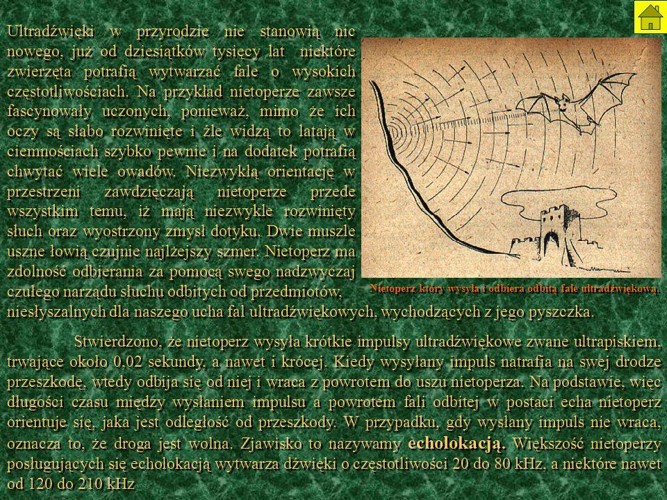 Nietoperz który wysyła i odbiera odbitą fale ultradźwiękową.