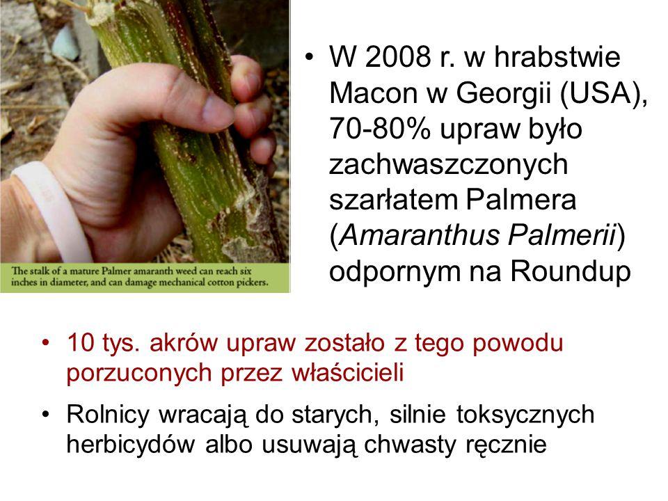W 2008 r. w hrabstwie Macon w Georgii (USA), 70-80% upraw było zachwaszczonych szarłatem Palmera (Amaranthus Palmerii) odpornym na Roundup