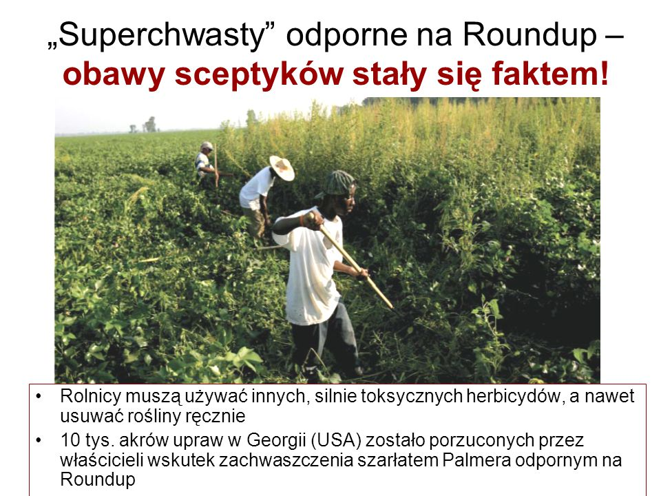 """""""Superchwasty odporne na Roundup – obawy sceptyków stały się faktem!"""