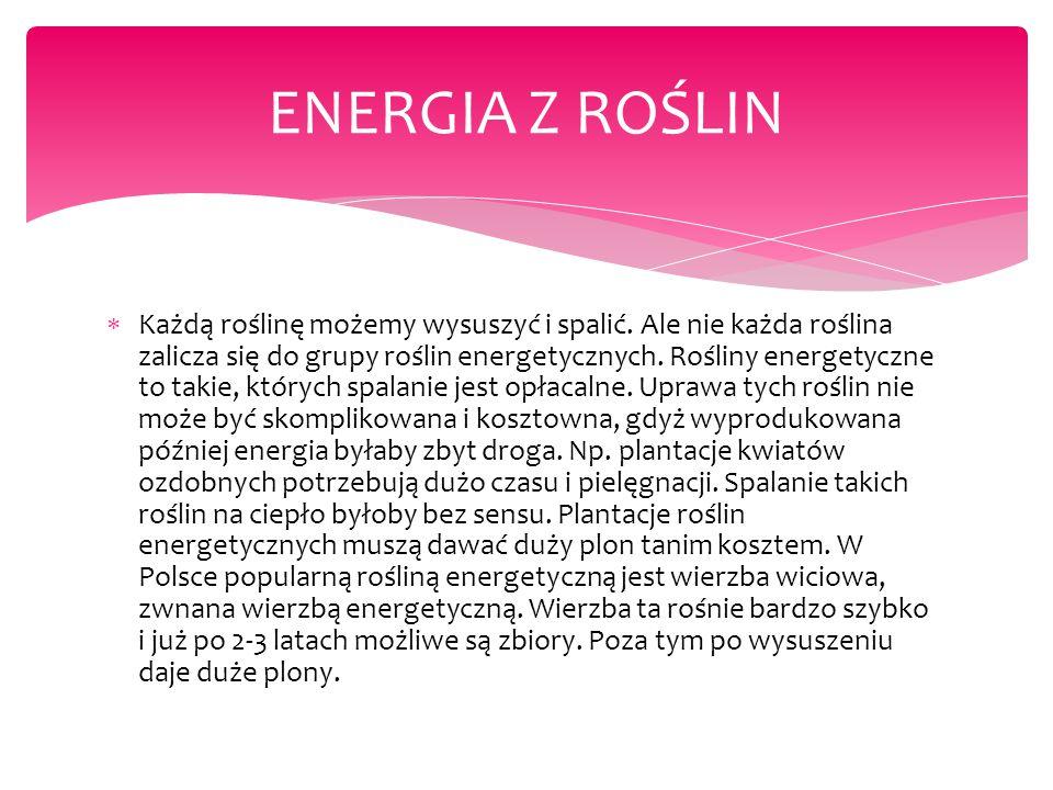 ENERGIA Z ROŚLIN