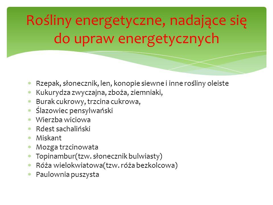 Rośliny energetyczne, nadające się do upraw energetycznych