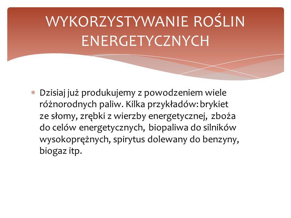WYKORZYSTYWANIE ROŚLIN ENERGETYCZNYCH