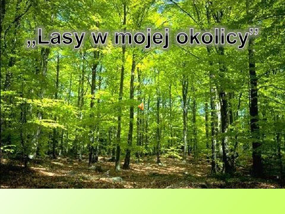 """""""Lasy w mojej okolicy"""