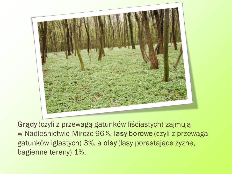 Grądy (czyli z przewagą gatunków liściastych) zajmują w Nadleśnictwie Mircze 96%, lasy borowe (czyli z przewagą gatunków iglastych) 3%, a olsy (lasy porastające żyzne, bagienne tereny) 1%.